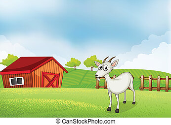 A white goat at the farm