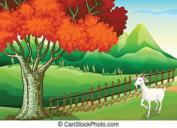 A white goat near the big tree