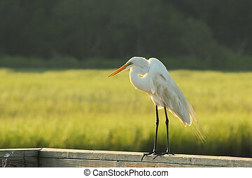 A White Heron Standing on a Railing - A white heron standing...