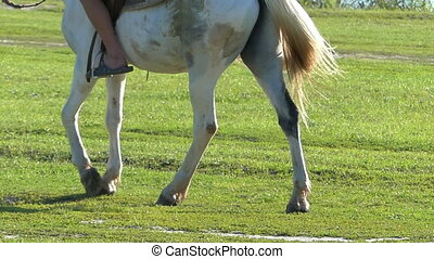 A white horse with a rider and stirrups goes - A striking...