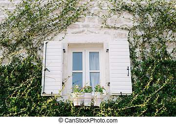 A white plastic window with open shutters on a stone wall with a plant climbing over it.
