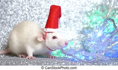 a white rat in Santa's Christmas cap on a silver background, next to a multi-colored flashing garland in the form of snowflakes. close-up. symbol of 2020. copy space