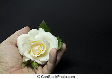 white rose on the hand of a man on a black background