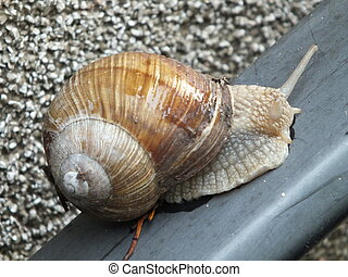 A white snail on the handrail
