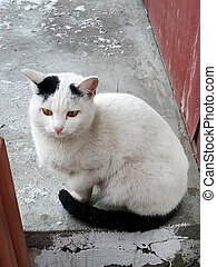 A white street cat with yellow eyes sits and looks at the screen dirty on the pavement and is sad. The irresponsible attitude of people, cruelty to animals, protection of smaller brothers