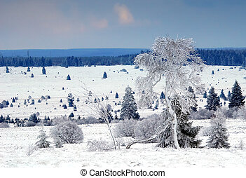 winter landscape - A white winter landscape