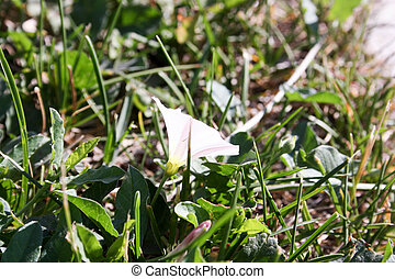 A whitewhite flower in a green grass