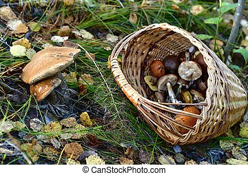 A wicker basket full of mushrooms thrown in a ravine, near the found mushrooms.