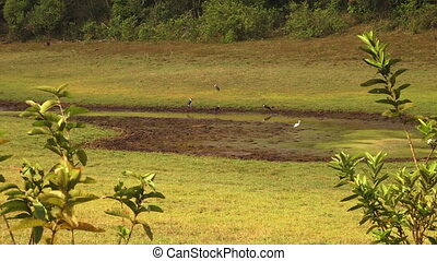 A wide view of birds in mud - A wide static shot of birds in...