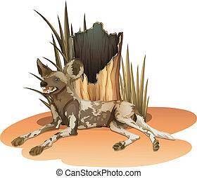 A wild dog near the stump