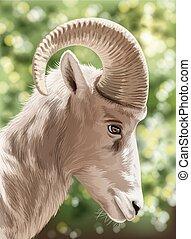 A wild goat - An image of a wild goat