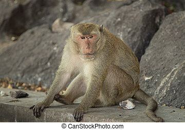 A wild macaque sits by the rock on the road in a national park.