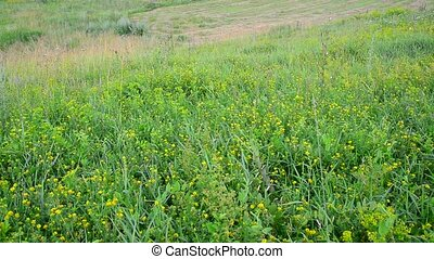 wild meadow with sloping and growing grass