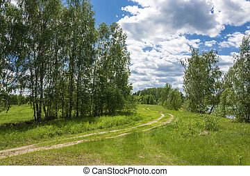 A winding dirt road by the river on a sunny summer day.