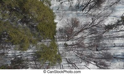 A winter forest. A woman riding a horse. Aerial view. Wide...