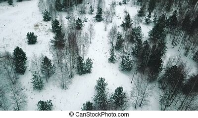 A winter forest. An overview from the helicopter drone. Wide...