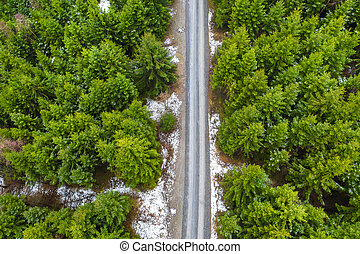 a winter needle forest with a path in the middle from above