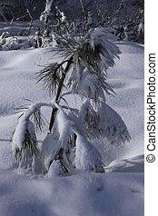 A Winter Scene - A snow covered winter scene.