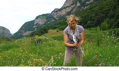 A woman collects medicinal oregano marjoram in a meadow in...