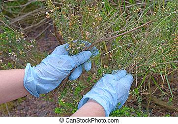 woman cut weeds in his garden