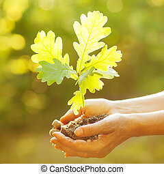 A woman holding young oak tree in hands against spring green background. Environmental protection concept