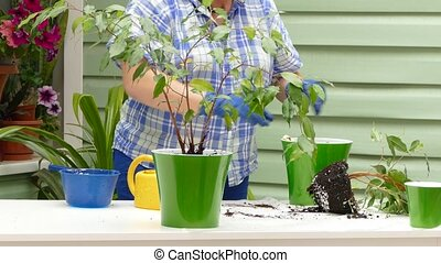A woman is engaged in transplanting indoor plants on the street