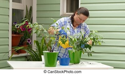a woman is watering a newly transplanted indoor plant