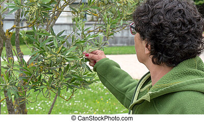 woman looking at the olive leaf