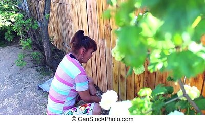 a woman paints a fence at their summer cottage