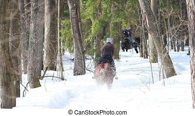 A woman riding a horse in the forest. Back view