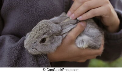 A woman stroking a domestic rabbit - A homemade rabbit in...