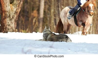 A woman walking on a horse in the forest on a snowy ground....