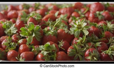 A woman's hand puts strawberries on a tray with berries. Close-up of a wet red ripe strawberry on a tray of steel with holes. Tracking slow motion video. Soft focus. Full HD video, 240fps, 1080p