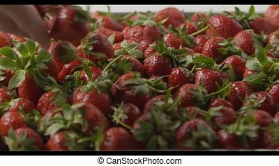 A woman's hand throws some strawberries on a tray with berries. Close-up of a wet red ripe strawberry on a tray. Tracking slow motion video. Soft focus. Full HD video, 240fps, 1080p