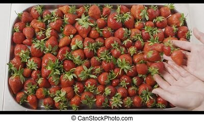 A woman's hands throw some strawberries on a tray with berries. Wet red ripe strawberry on a tray of steel with holes. Berries background. Slow motion video. Top view. Full HD video, 240fps, 1080p