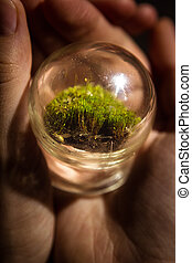 A wonderful wonderful world in the palm of your hand. A piece of nature under glass. The concept of a child's play with glass. Moss.