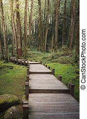 A wood path in Alishan National Scenic Area, Chiayi Province, Taiwan