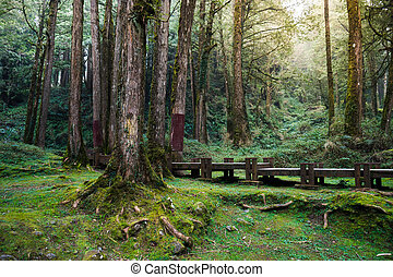 A wood path in Alishan National Scenic Area