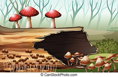 A wood with mushrooms