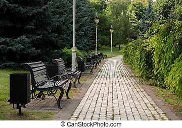 wooden bench in the summer park