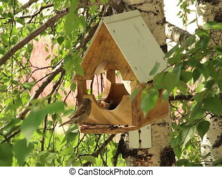A wooden bird feeder - Birds fly up to the feeder and peck...