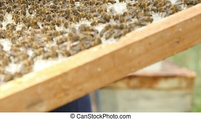 A wooden board with hexagon beecombs and bees is taken up -...