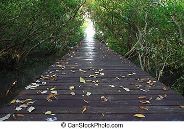bridge in the mangrove forest