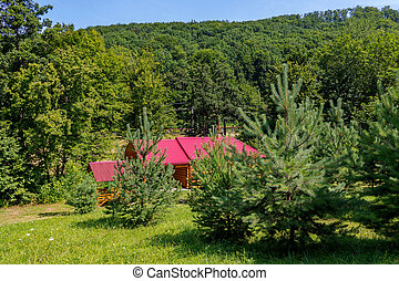 A wooden house is lit by bright sunshine in the green forest