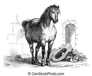 A workhorse, vintage engraving. - A workhorse, vintage...