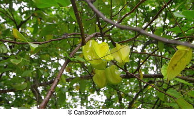 A yellow fruit on a tree