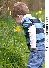 A Young boy smelling a daffodil
