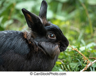 A young brown dwarf rabbit sitting in the grass