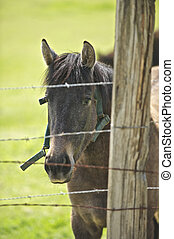 A young brown horse is approaching from behind the stiff barbed wire fence