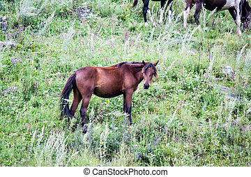 A young foal